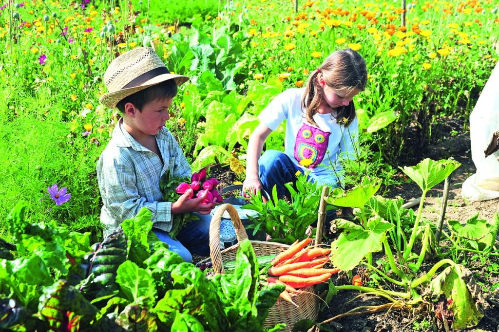 Ecosite du bourgailh un projet nature et environnement - La cuisine des enfants ...